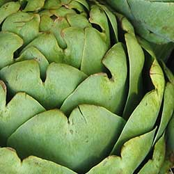 Globe Artichoke Genome Sequenced