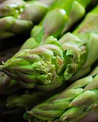 XIV International Asparagus Symposium