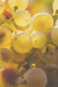 Call for abstracts: Chenin Blanc International Congress
