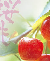VIII International Cherry Symposium, Yamagata, Japan, 2017