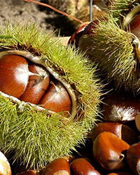 Save the date: VII International Chestnut Symposium