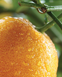IV International Symposium on Citrus Biotechnology