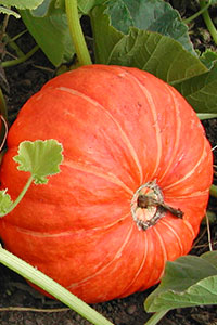 Save the date: VI International Symposium on Cucurbits