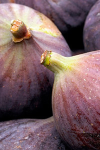 VII International Symposium on Fig