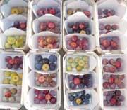 XIV Eucarpia Symposium on Fruit Breeding and Genetics