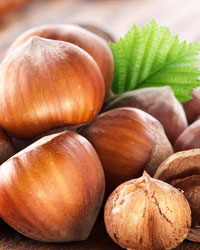 Save the date: X International Congress on Hazelnut