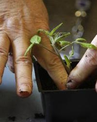 International Symposium Horticultural Therapies: Past, Present & Future