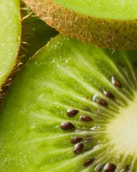 X International Symposium on Kiwifruit