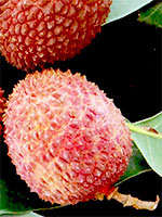 Save the date: VI International Symposium on Lychee, Longan and Other Sapindaceae Fruits