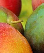 1st Announcement of the 12th International Mango Symposium