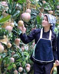 12th International Mango Symposium - registration is open