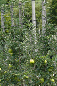 Save the date: XIII International Symposium on Integrating Canopy, Rootstock and Environmental Physiology in Orchard Systems