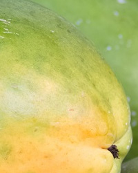 VI International Symposium on Papaya