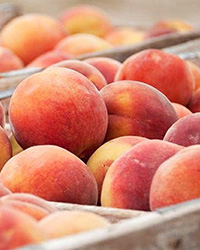 Save the date: X International Peach Symposium