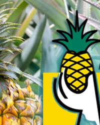 IX International Pineapple Symposium