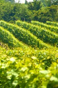International Symposium on Precision Management of Orchards and Vineyards