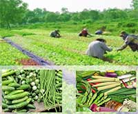 III Southeast Asia Symposium on Quality Management in Postharvest Systems