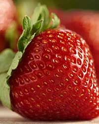 IX International Strawberry Symposium