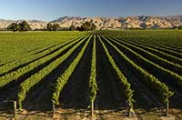 II International Workshop on Vineyard Mechanization and Grape and Wine Quality