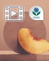 Peach Webinars - June 1-4 2021